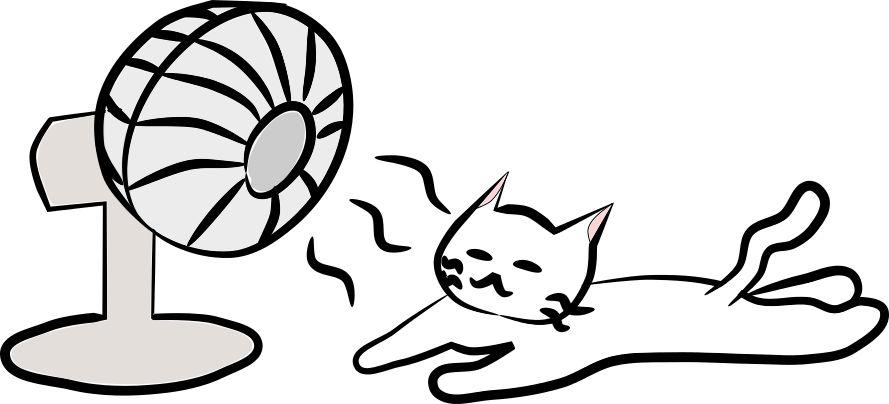497998 夏 扇風機 猫