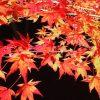 京都嵐山の紅葉2016!ライトアップのおすすめ3選+2