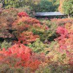東福寺の紅葉2016ライトアップや見ごろはいつ?