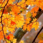 養老渓谷の紅葉2016、ライトアップは必見!息をのむ美しさです