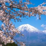 日本五大桜はどこにある?一度は訪れたい、天然記念物の桜たち