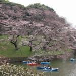 千鳥ヶ淵の桜2016、見ごろは週末。お堀と桜は絵になります。
