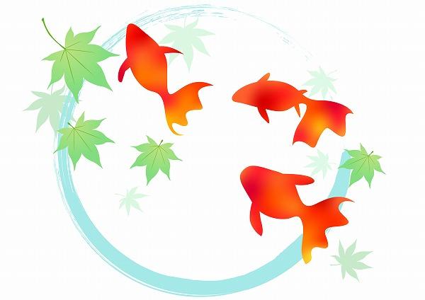 475320 夏 金魚