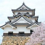 彦根城 桜の見頃とライトアップ!ひこにゃんにも会えるよ